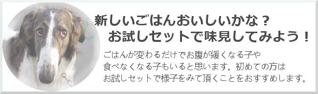 otamesi_top